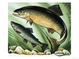 The Salmon's Journey Giclee Print by David Pratt