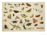 Study of Insects Giclee Print by Jan Van, The Elder Kessel