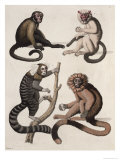 Monkeys Giclee Print by Vittorio Raineri