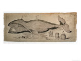 Captured Whale Giclee Print