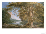 Ancient Beech Tree Giclee Print by Paul Sandby