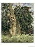 Old Elms in Prater, 1831 Giclee Print by Ferdinand Georg Waldmuller