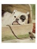 Bulldog, 1927 Giclee Print by Cecil Aldin