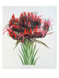 Gymea Lily, 1826 Giclee Print