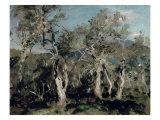 Olives, Corfu, 1912 Giclee Print by John Singer Sargent