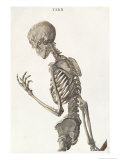 Bones of the Skeleton, from Tabulae Osteologicae by Christoph Jacob Trew Reproduction proc&#233;d&#233; gicl&#233;e par Nikolaus Friedrich Eisenberger