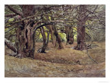 Yews in the Old Yews Wood, Earl of Radnor's Estate, Near Salisbury Giclee Print by George Carline