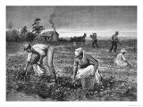 The Goober-Gatherers', 1890 Giclee Print by Horace Bradley