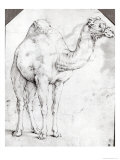 Camel Giclee Print by Battista Franco