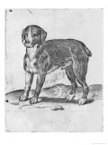 Dog Giclee Print by Agostino Carracci