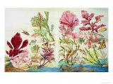 Underwater Plants Giclee Print