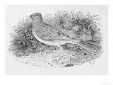 The Skylark Giclee Print by Thomas Bewick