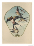 Fan, Plate 30, Fantaisies Decoratives, Librairie de l'Art, Paris, 1887 Giclee Print by Jules Auguste Habert-dys