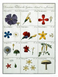 Second Table of the Linnean Plant Sexual System Giclee Print by Carl Linnaeus