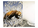 Nature's Kingdom: Cat-Bear of the Himalayas - the Lesser Panda Giclee Print by Susan Cartwright