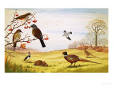 Unidentified Countryside Birds Montage Including Pheasant Giclee Print by John Rignall