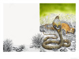 Nature's Kingdom: King Cobra Meets His Match Giclee Print by Susan Cartwright