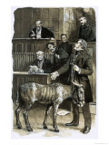 Richard Martin in Court with a Neglected Donkey Giclee Print by Clive Uptton