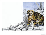 Nature's Kingdom: Hunter of the Highlands - the Wildcat Giclee Print by Susan Cartwright