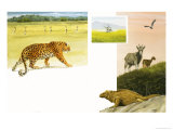 Unidenfieid African Wildlife Montage with Leopard Giclee Print by David Nockels