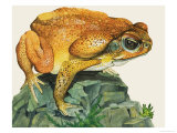 The Giant Toad Giclee Print by Kenneth Lilly