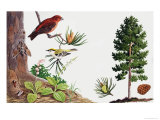 The Pine Tree and Its Inhabitants Giclée-Druck von John Rignall