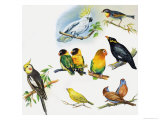 Pet Birds, Giclee Print