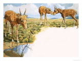 Saiga Antelope Giclee Print