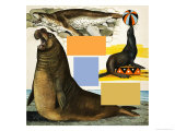 Seals and Sea-Lions, Including Seal Balancing Ball on Nose Giclee Print by Arthur Oxenham