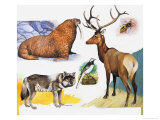 W is For Walrus, Wagtail, Wasp, Wapiti and Wolf Giclee Print by Arthur Oxenham