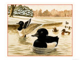 Ducks and Drakes Giclee Print by Kenneth Lilly