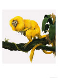 M For Marmoset Giclee Print by Kenneth Lilly