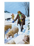Farmers Bringing in Their Sheep Giclee Print by Clive Uptton
