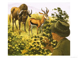 Man Peering Through Bushes at a Gnu and Antelope Giclee Print by Bob Hersey