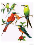 Unidentified Birds Montage Giclee Print by Kenneth Lilly