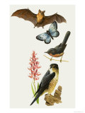 Britiish Wildlife under Threat of Extinction Giclee Print by Bob Hersey