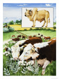 Nature's Kingdom: Food For Thought Giclee Print by Susan Neale