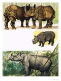 Peeps at Nature: The Rhinoceros Giclee Print by Arthur Oxenham