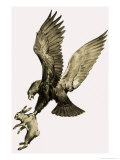 The Eagle and the Hare, from the Story by Aesop Giclee Print by James Edwin Mcconnell