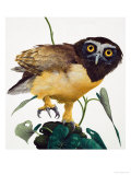 Spectacled Owl Giclee Print by Kenneth Lilly