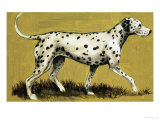 Dalmation Dog Giclée-tryk af  English School