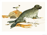 Female Grey Seal with Pup Giclee Print by Kenneth Lilly