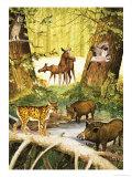 Wild Boar, Jay, Long-Eared Owl, Lynx, Elk and Calf Giclee Print by Arthur Oxenham
