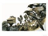 Magpies Watching a Stoat Atop a Bird House Giclee Print by G. W Backhouse