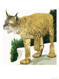 The Lynx Giclee Print by Kenneth Lilly