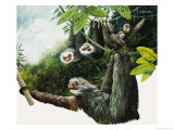 Two-Toad Sloth Giclee Print by Kenneth Lilly
