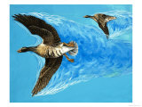 Turbulence Caused by Birds Flying Giclee Print by Makele. D.