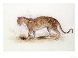 The Leopard Giclée-Druck von Edward Lear