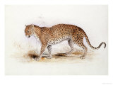 The Leopard Giclee Print by Edward Lear