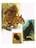 Rare Breeds: Spot the Carnivore Giclee Print by David Nockels